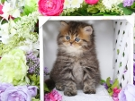 Spring persian kitty