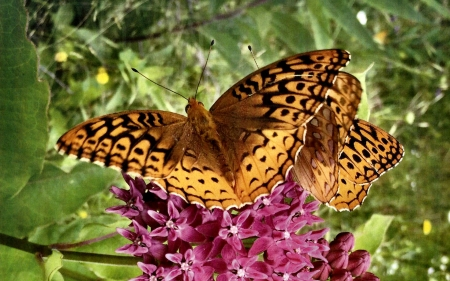 Butterflies on lilacs fc butterflies animals for Lilac butterfly wallpaper