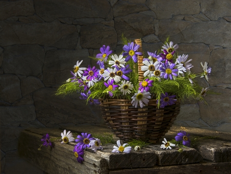 Still Life - table, flower, purple, white