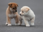 Cute Two Puppies