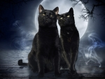 Full Moon, black cats and a ghost