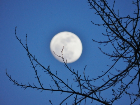 Not So Distant Moon - Spring, Photography, Sky, Trees, Moon, Space