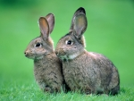 Two Cute Bunnies