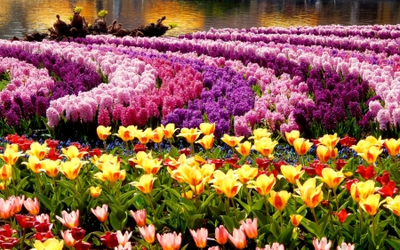 Spring Flower Park - colors, tulips, hyacinths, blossoms