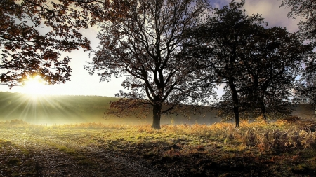 sunrise on the field - field, sunrise, tree, grass
