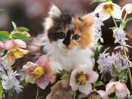 Cute Kitty - kitty, animal, kitten, cat, flowers