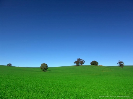 Nice weather! - Grass, Sky, Trees, Green, Blue