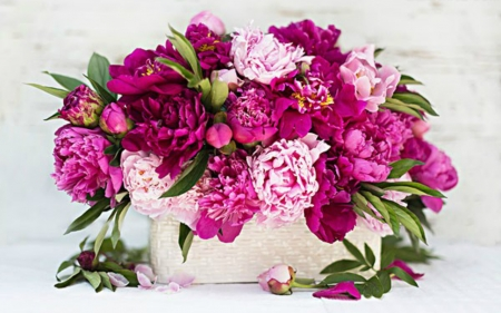 Beautiful Flowers - pink, still life, nature, flowers