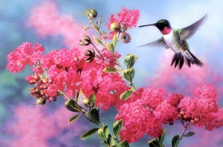 Gathering Nectar - love four seasons, flowers, spring, paintings, animals, hummingbird, nature, birds, pink