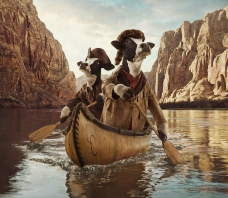 A long journey - fantasy, commercial, animal, funny, boat, hat, cow, journey, add, vaca, fantays, river, creative, andy mahr