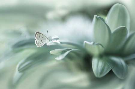 Butterfly - petals, butterfly, Spring, rain drop, drop, green, flower, water