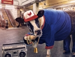 The Rapper Cow