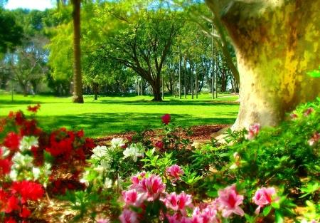 Spring in the Park - colors, trees, blossoms, azaleas, sunshine