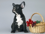 French Bulldog Sitting Near a Basket
