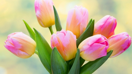 Spring Bouquet - flowers, tulips, bouquet, Spring