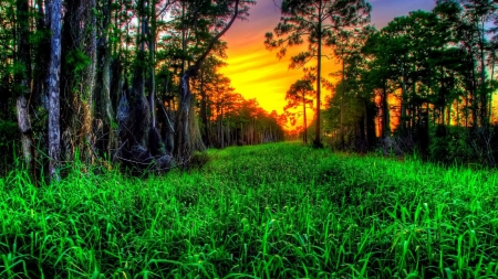 Beautiful Green Sunset hdr - sunset, green, trees, sky, grass, nature, forest