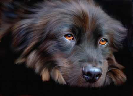 Dog - digital, animal, caine, black, face, art, eyes, dog, luminos