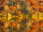Golden Autumn Lake