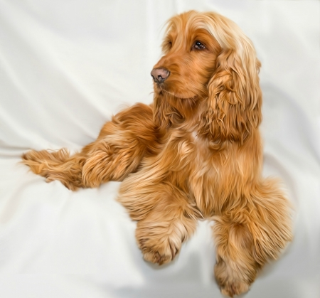 Cocker spaniel dogs animals background wallpapers on - Free cocker spaniel screensavers ...