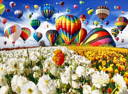 Hot Air Balloons Over Flower Field FC - beautiful, flight, artwork, painting, art, illustration, wide screen, flowers, scenery, aviation, hot air balloons