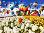 Hot Air Balloons Over Flower Field FC