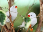 Cute White Birds