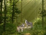 Morning in Wolf Forest