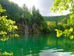 Beautiful Green Pond