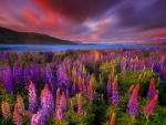 Springtime rush of lake Tekapo