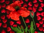 Poppy and hearts