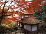 Sankeien Garden in Fall