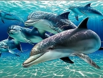 Wonderful dolphins