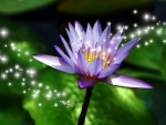 Stars on Purple Flower