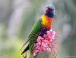 Parrot Sitting on a Pink Flowers