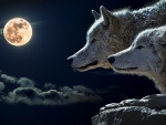 Full moon wolves.