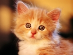 Cute Kitty Looking