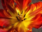 Flaming Flower
