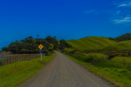 Country road - coromandel, fields, gravel, farms, lush, road, country, green, new zealand