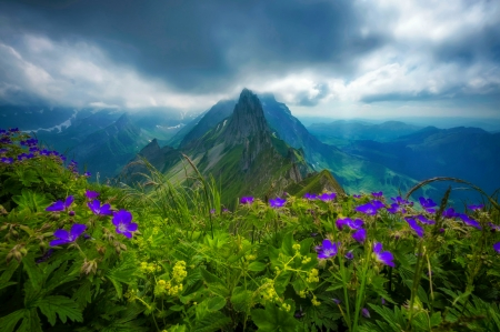 Mountain wildflowers - clouds, beautiful, sky, wildflowers, mountain, peak, pretty, lovely, view