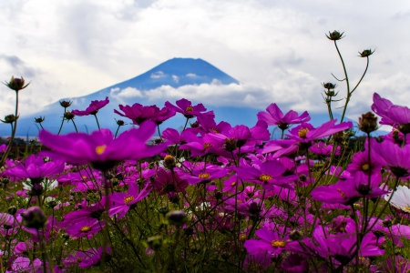 Mountain  wildflowers - landscape, clouds, beautiful, sky, wildflowers, pretty, mountain, hills, flowers