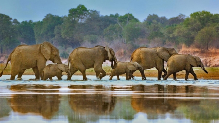 elephants - cool, fun, animals, elephants