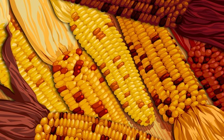 Thanksgiving Harvest - corn, harvest, thanksgiving, art, fall, autumn