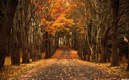 Autumn Forest Road - forest, road, autumn, trees