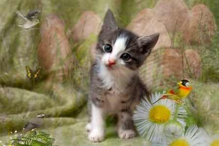 Cute Kitten - Birds, kitten, Cat, flowers, cute, sweet