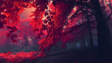 Crimson forest - Trees, Forest, Crimson, HD