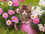 Kitty and Flowers