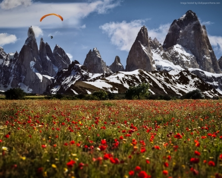 Poppies Field in  Switzerland - field, mountains, meadow, clouds, poppies, nature