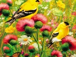 Goldfinches in Flowers