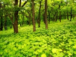 Beautiful Green Spring Forest