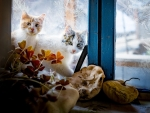 Cats Peering through Frosty Window